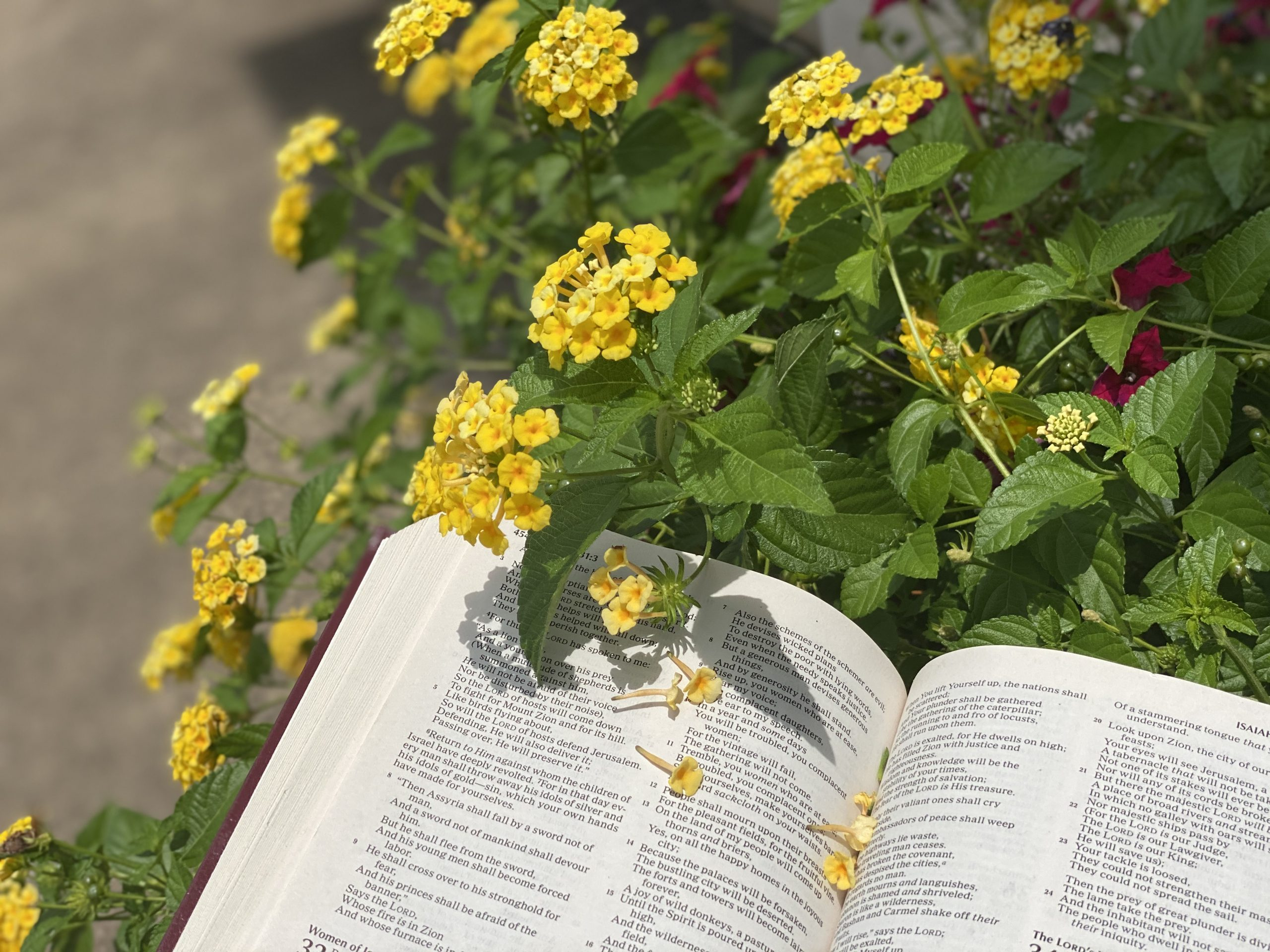 Book of Acts Deep Diving Bible Study